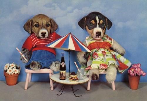 Carte postale, Cartes postales kitsch, Anthropomorphisme, William Wegman, chien, tatouages tatoueur, taxidermie anthropomorphique, animaux, humour