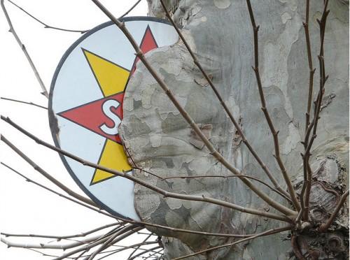 Plaque émaillée, arbre, Platane, plaque émaillée mangée par un platane, arbre remarquable, écorce, Les Beaux dimanches