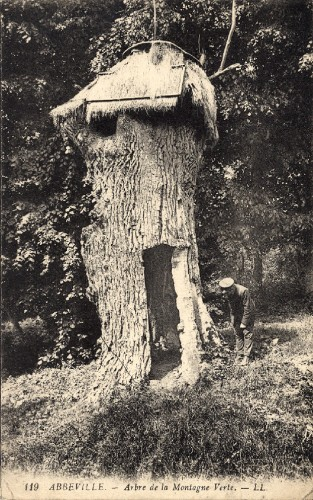 carte postale ancienne, arbre, grande guerre