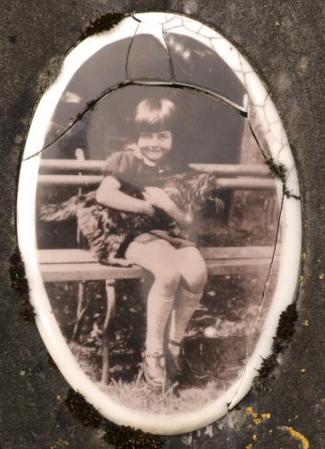 cimetière,plaque photo porcelaine,portrait,chat