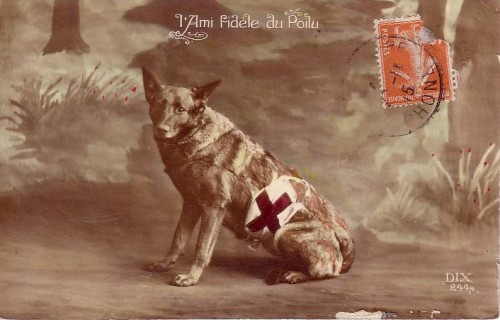 cartes postales anciennes,photo,illustration,guerre 14-18,grande guerre,chien,collection,brocante