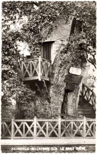 Arbre remarquable,chêne d'Allouville-Belfosse,Art populaire,art religieux,art singulier,croyance,Les Beaux Dimanches