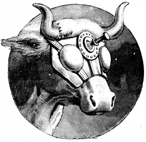 Masque de Bruneau, gravure, illustration, abattoirs, Les beaux dimanches, La petite revue