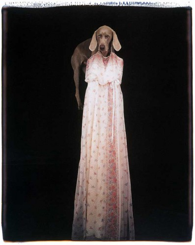 Anthropomorphisme, William Wegman, chien, tatouages tatoueur, taxidermie anthropomorphique, animaux, humour
