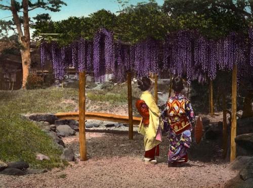 glycines,wisteria,japon,okinawa soba,plaque émaillée