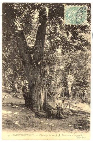 arbres remarquables, cartes postales anciennes, arbres honorables, extraordinaires, châtaignier. Châtaigne.