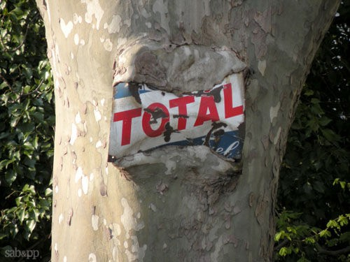 Plaque émaillée, arbre, Platane, plaque émaillée mangeé par un platane, arbre remarquable, écorce, Les Beaux dimanches