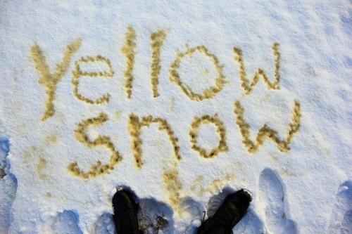 don't eat the yellow snow,frank zappa,neige,photo
