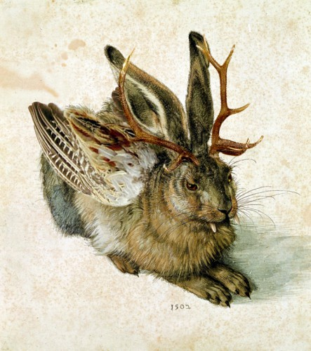 taxidermie,wolpertinger,animal empaillé,art populaire,jackalope